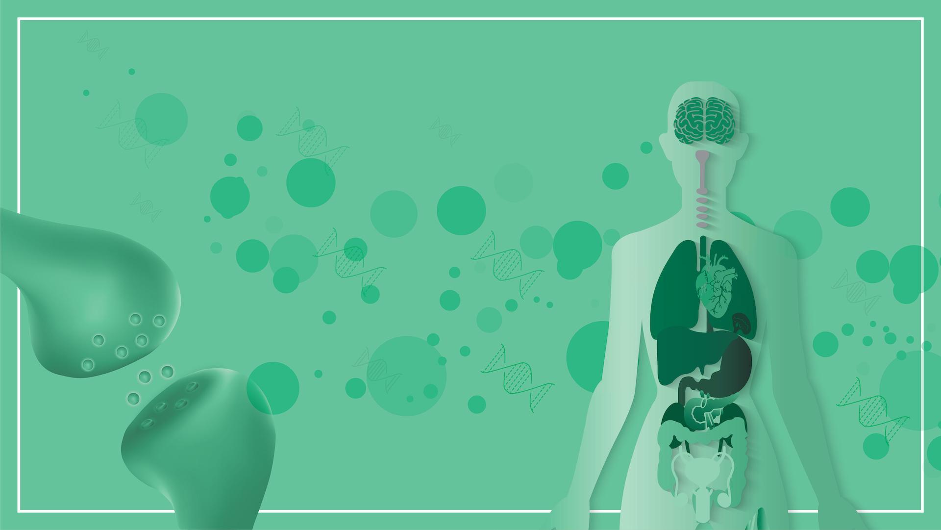 Was ist CBD und wie wirkt es im menschlichen Körper?