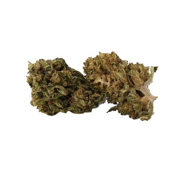 Mango Kush CBD Blüten - CBD Aromablüten - Sanaleo
