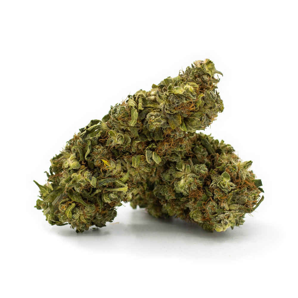 Orange Bud CBG Blüten - Aromablüten - Sanaleo CBD